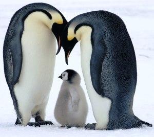 bornwild_penguin_baby